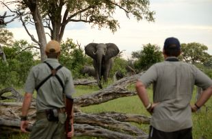 17_-_Imvelo_Safari_Lodges_-_Bomani_Tented_Lodge_-_Game_viewing_on_foot