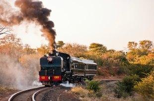 Bushtracks train