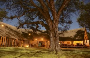 Camelthorn - main lodge (WETU)