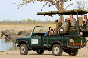 Camelthorn - safari game drive