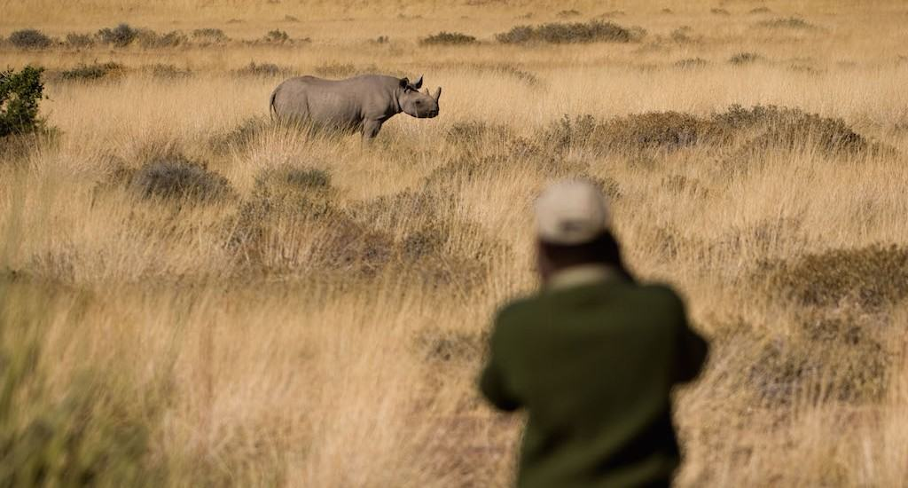 Black Rhino tracking in the Palmwag Concession, north west Namibia.