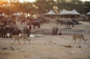 somalisa_wildlife_visit (WETU)